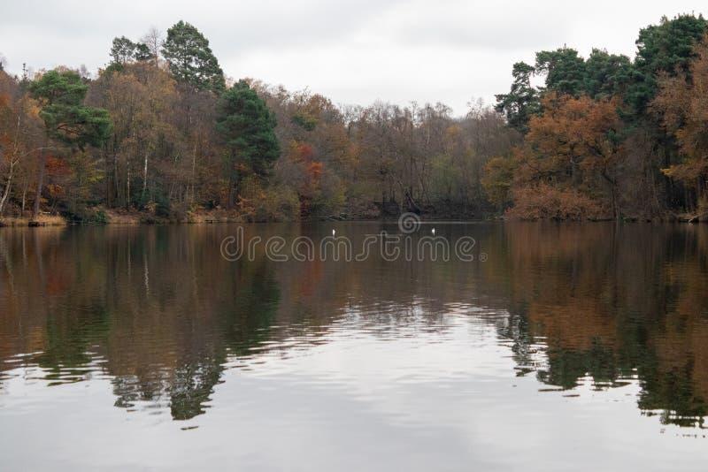 英国布尚公园考利晚秋 免版税库存照片
