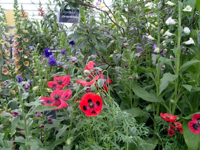 英国村庄庭院花显示 免版税库存图片