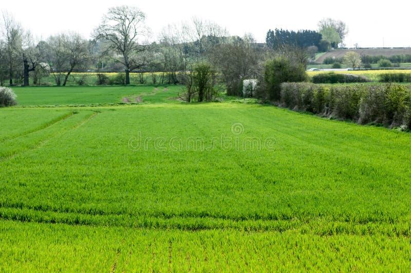 英国栖所可耕的领域边缘 免版税库存图片
