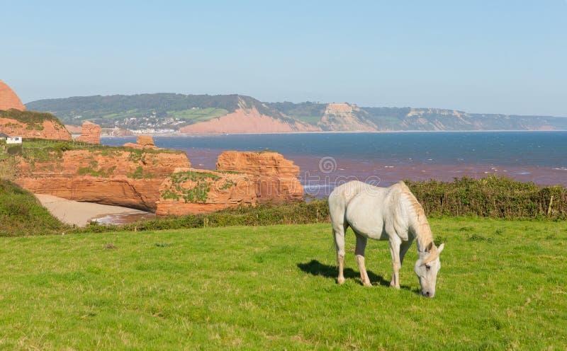 英国海岸白色小马和砂岩岩石堆积Ladram海湾德文郡英国英国位于在Budleigh Salterton和Sidmouth之间 免版税库存图片
