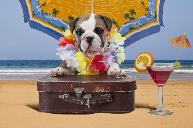 英国牛头犬小狗在沙滩伞下 图库摄影