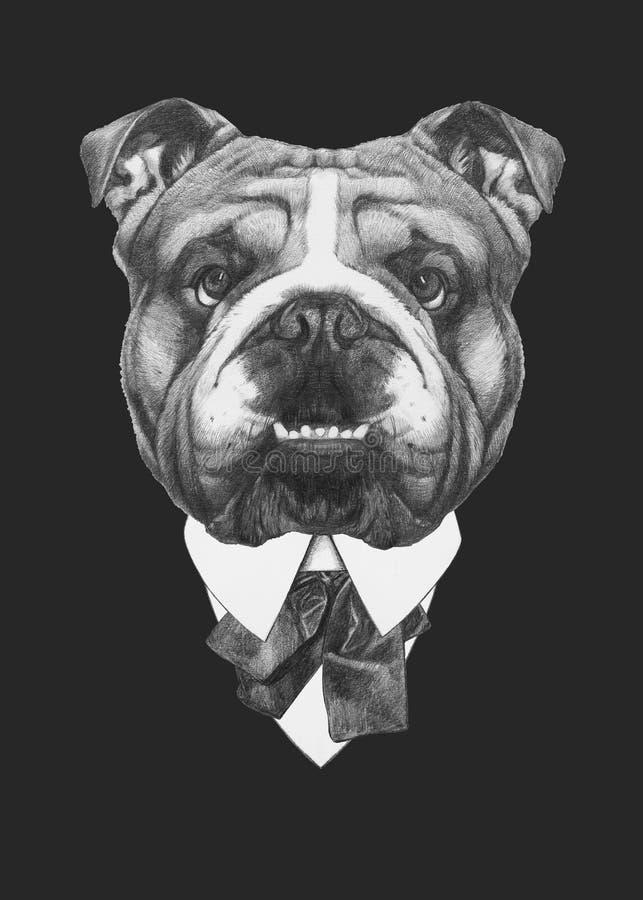 英国牛头犬画象在衣服的 库存例证
