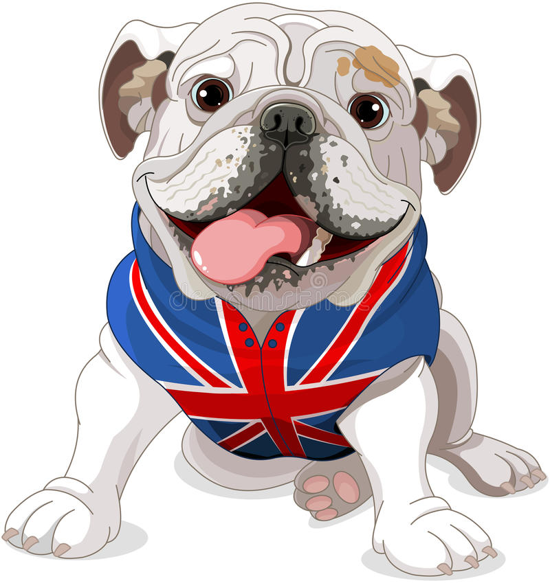 英国牛头犬 库存例证