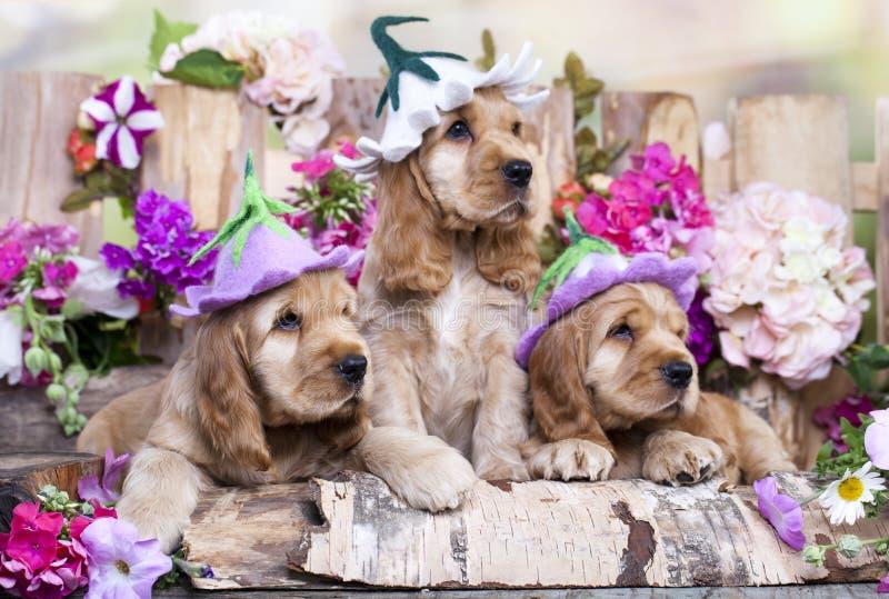 英国猎犬小狗 免版税库存照片