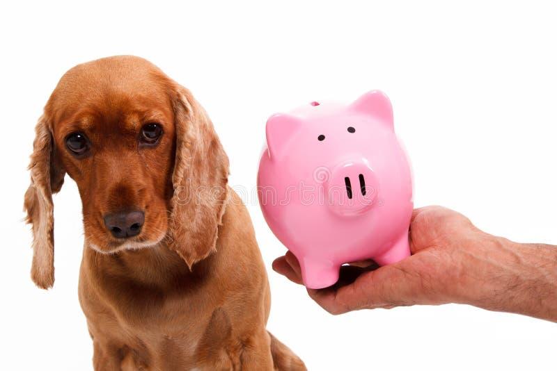 英国猎犬狗和存钱罐 免版税库存图片