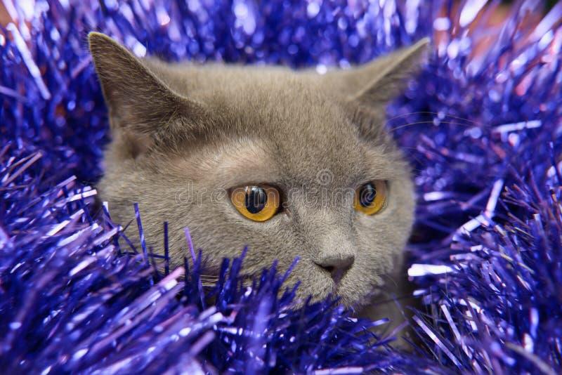 英国猫圣诞节 库存照片