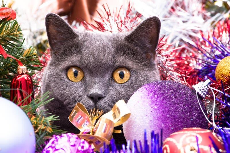 英国猫圣诞节 免版税库存照片