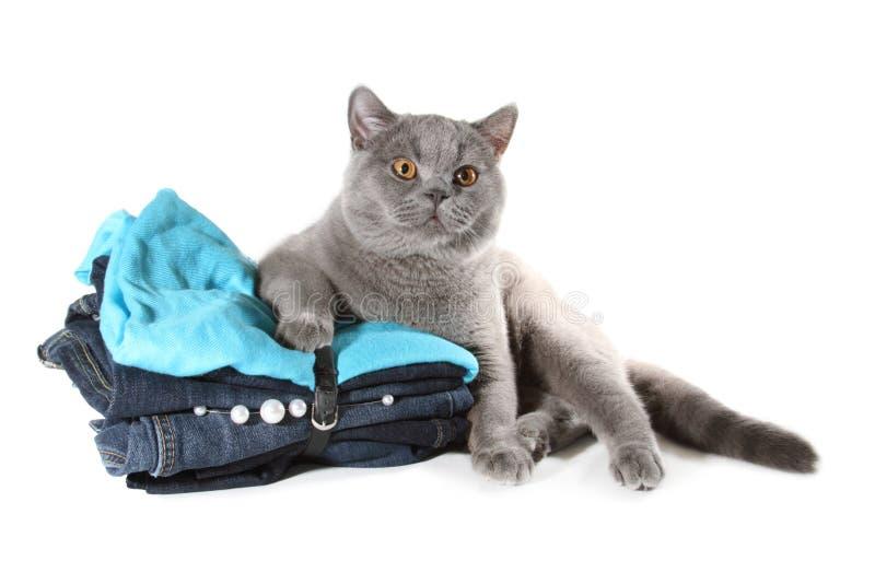 英国猫衣裳设置了坐 库存图片