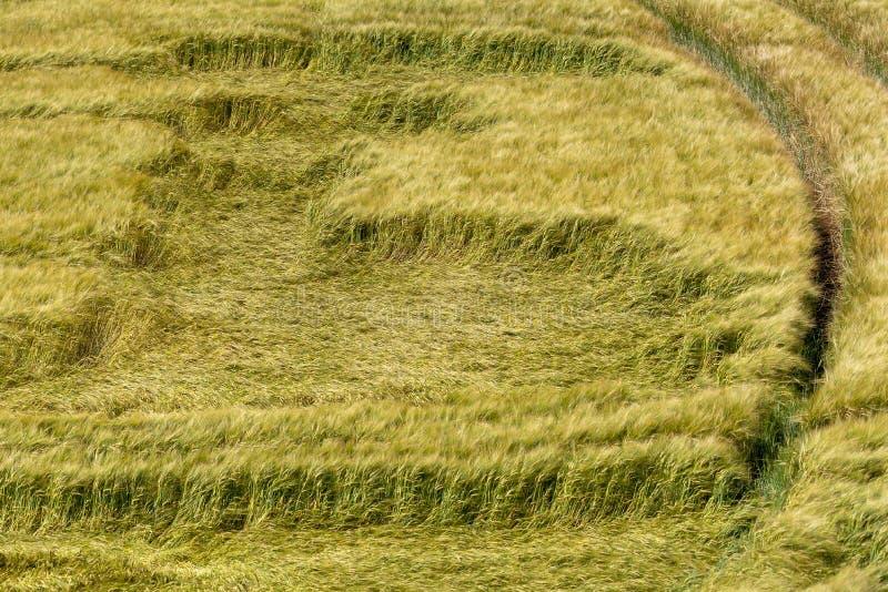 英国田地风暴破坏农作物 库存图片