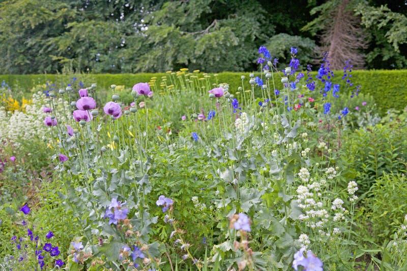 英国花园 库存图片