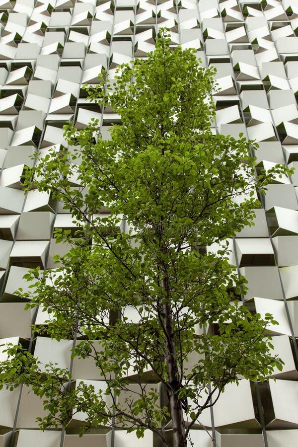 英国谢菲尔德市一座以芝士师形状的停车场前的一棵树 免版税图库摄影