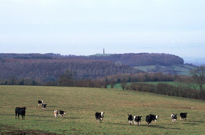 英国, Cotswolds,在边缘下的Wotton附近,对Tyndale纪念碑的看法 库存图片