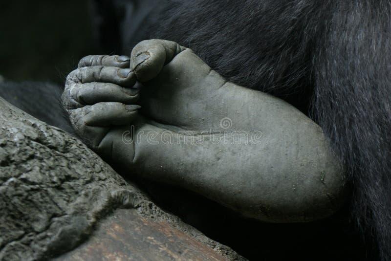 英尺大猩猩 免版税库存图片