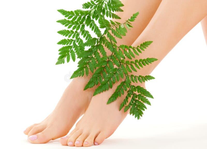 英尺女性绿色叶子 免版税库存照片