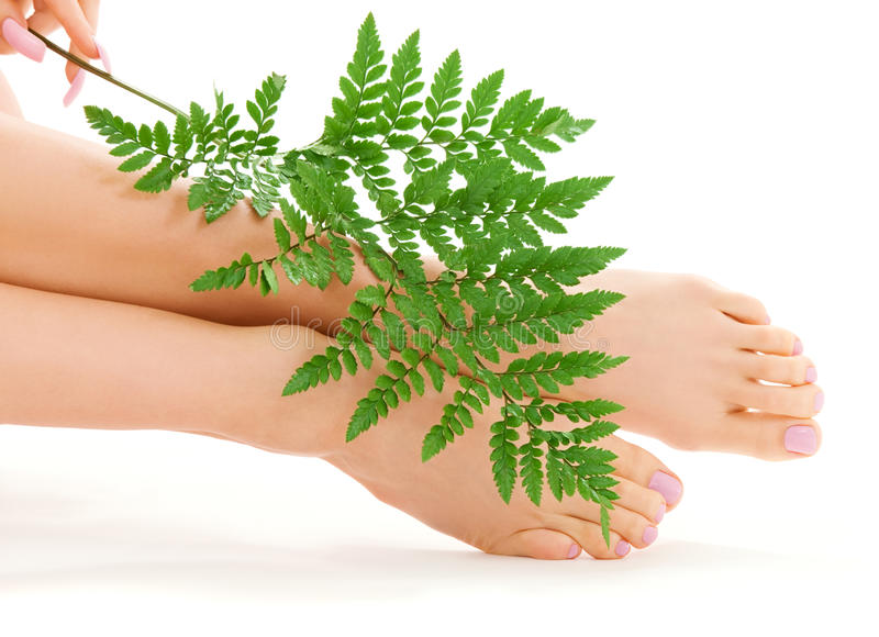 英尺女性绿色叶子 库存图片
