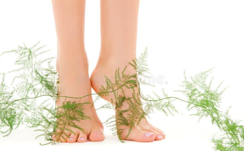英尺女性绿色植物 库存照片
