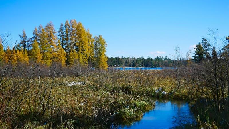 300英尺的从来源,湖Itasca密西西比河 库存照片