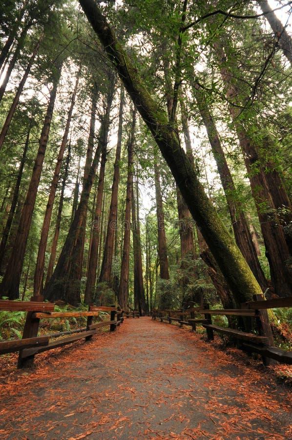 英尺路径走道在森林里 免版税库存照片