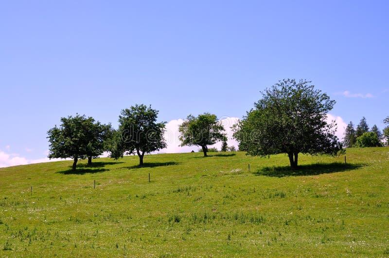 苹果乡下结构树 免版税库存图片