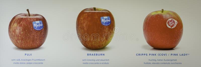 苹果品种 图库摄影
