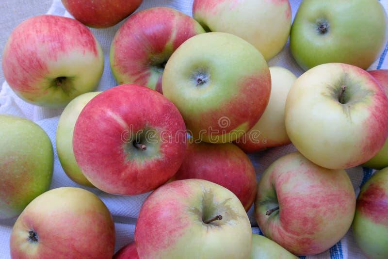 苹果在果树园,品种为夏天,波兰 免版税库存图片