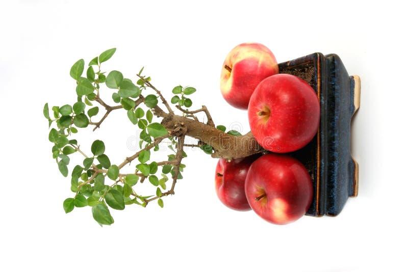苹果大小的结构树 库存照片