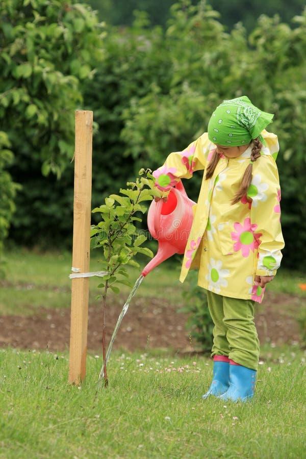苹果女孩一点结构树浇灌 免版税库存照片