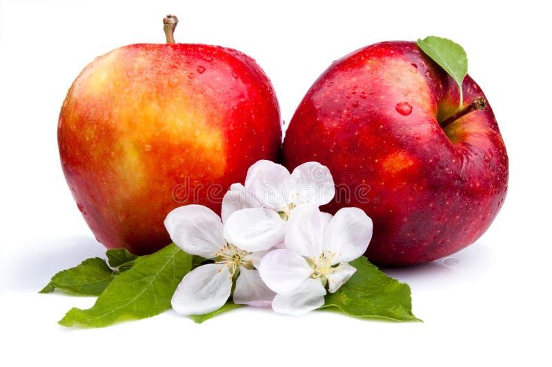 苹果开花水多的红色二 免版税图库摄影