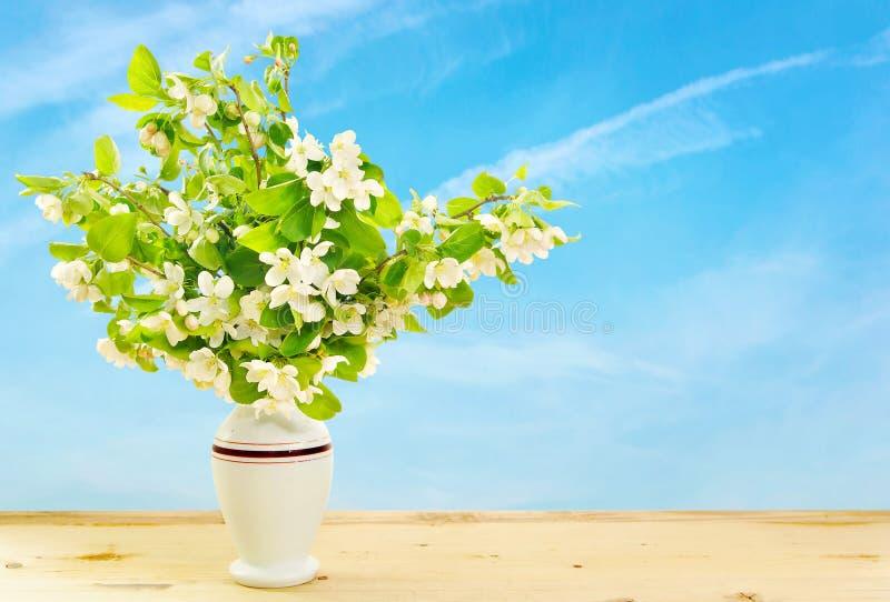苹果开花的分支在一个花瓶的反对蓝天 免版税图库摄影