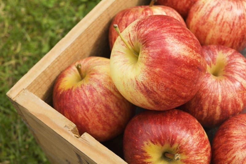 苹果把红色装箱 免版税库存图片