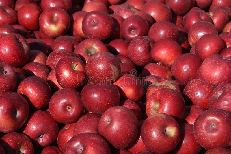 苹果收获 库存图片