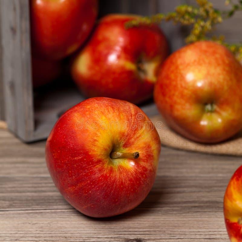 Download 苹果有机红色 库存照片. 图片 包括有 自然, 收获, 案件, 棚车, 申请人, 成熟, 问题的, 有机 - 59103158