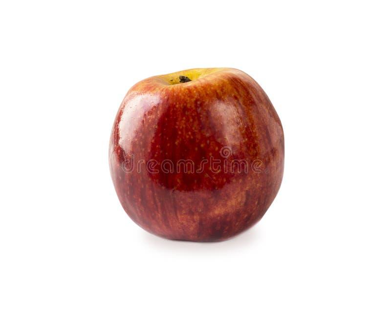 苹果查出的红色白色 苹果背景新白色 与拷贝空间的苹果计算机 免版税库存图片