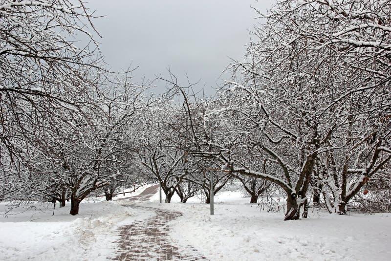苹果树庭院在冬天 库存图片