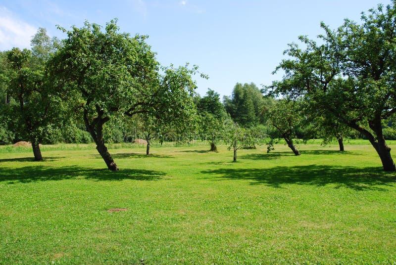 苹果树庭院 免版税库存照片