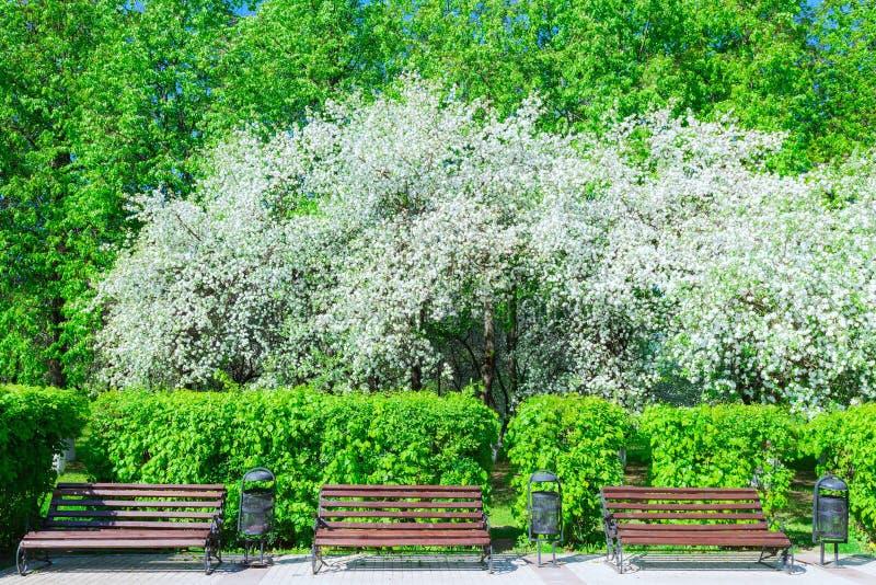Download 苹果树开花 库存照片. 图片 包括有 背包, 增长, budd, 环境, beautifuler, 绿色 - 72359204