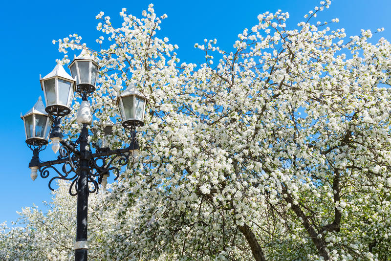 Download 苹果树开花 库存图片. 图片 包括有 beautifuler, 绽放, 增长, budd, 横向, beauvoir - 72359367