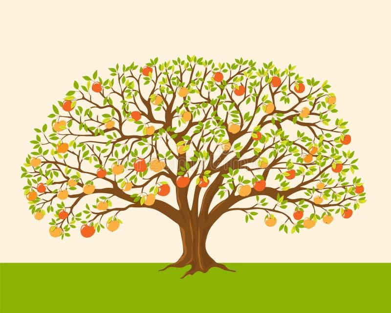苹果树用红色和黄色苹果 皇族释放例证