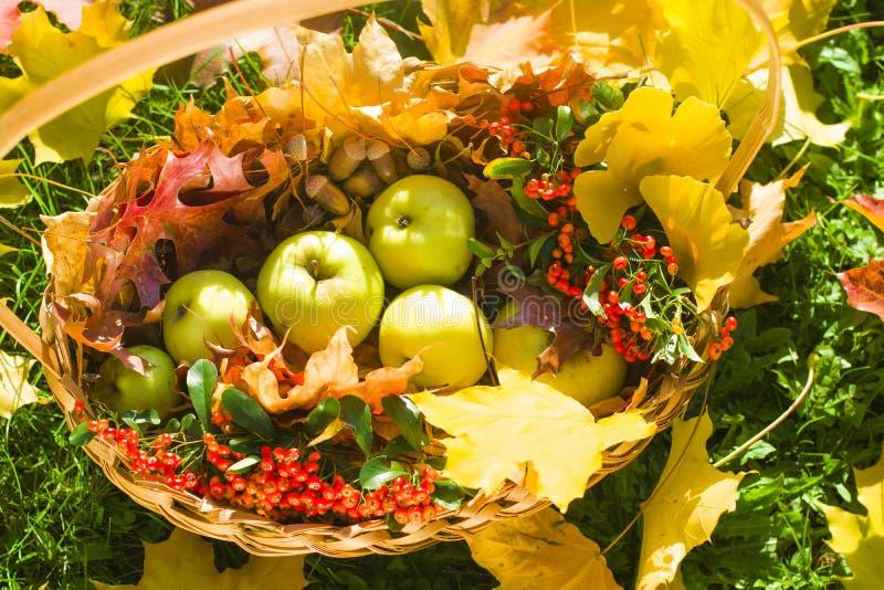苹果橡子橡木在秸杆篮子离开和莓果在草 免版税图库摄影