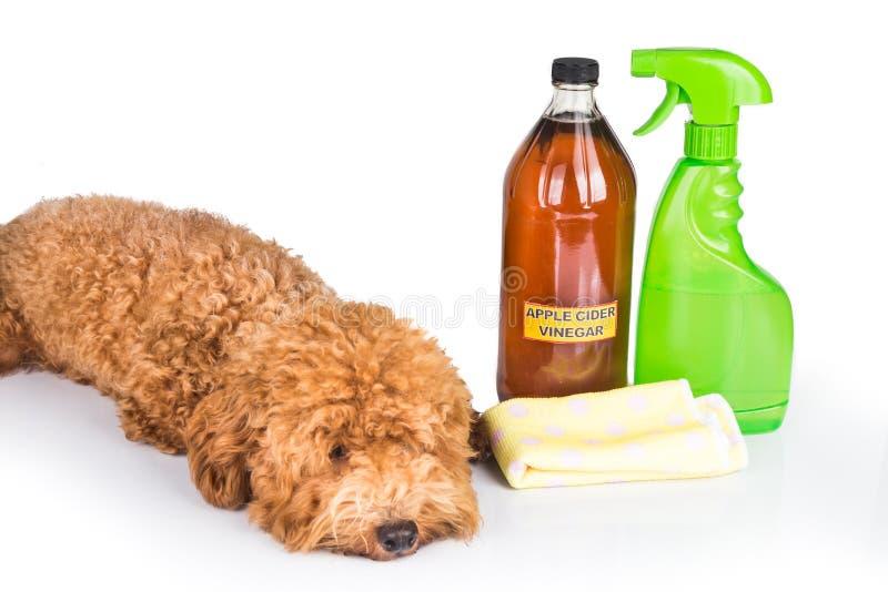 苹果汁醋有效作为自然蚤放水剂和所有 免版税图库摄影