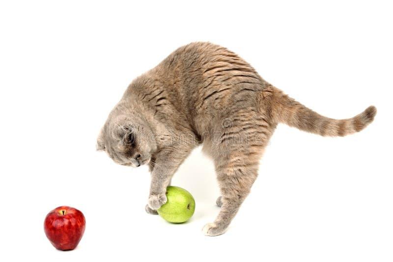 苹果猫 免版税库存图片