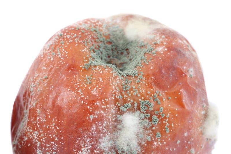 苹果真菌 图库摄影