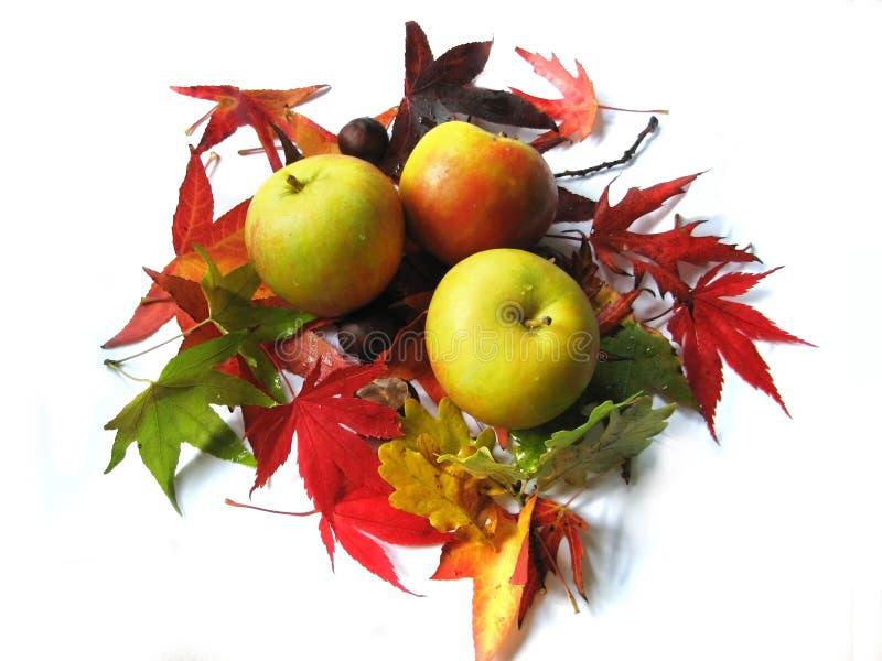 苹果秋叶 库存图片