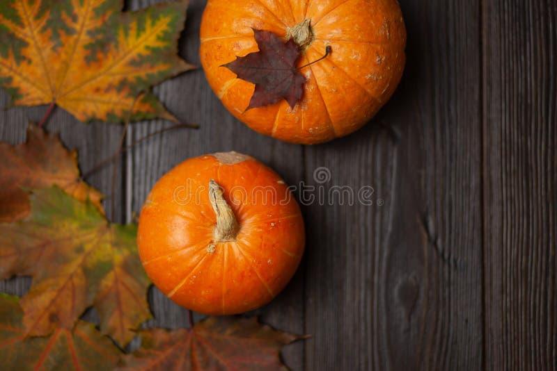 苹果秋天对光检查袋装花瓶的构成干燥叶子 南瓜 9个秋天颜色 收获 图库摄影