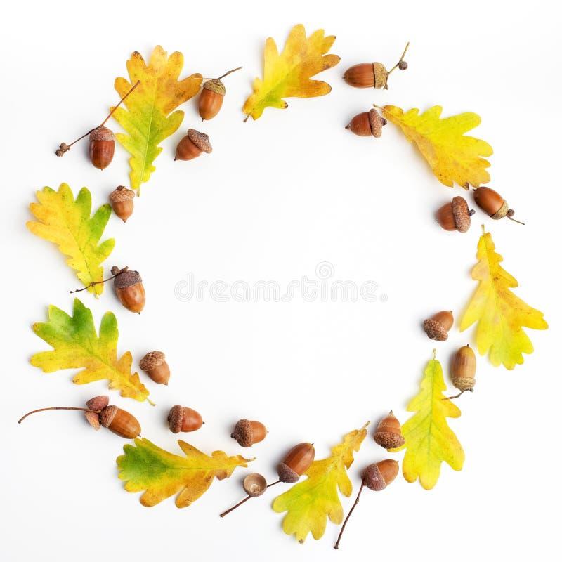 苹果秋天对光检查袋装花瓶的构成干燥叶子 框架由秋叶和杉木锥体做成在白色背景 平的位置,顶视图,拷贝空间 库存照片