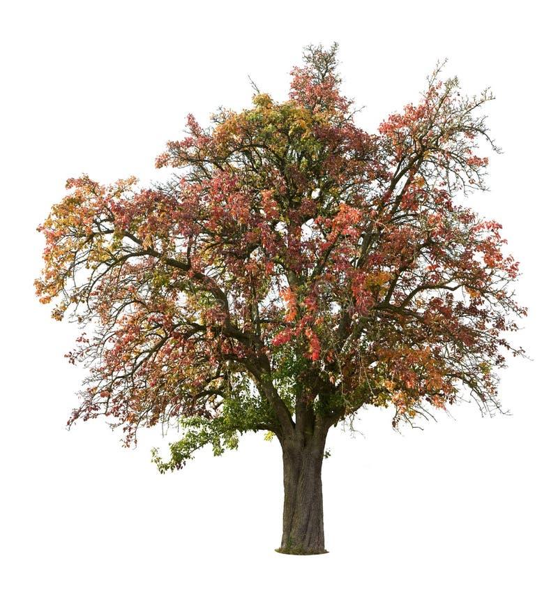 苹果秋天结构树 免版税库存图片