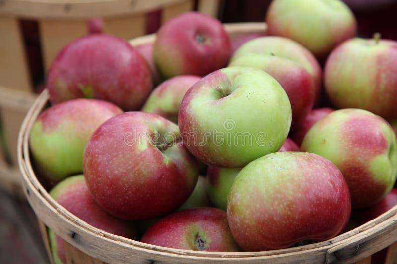 苹果篮子 库存图片