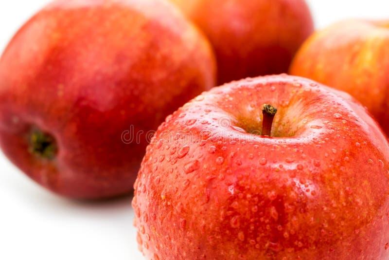 苹果红色成熟弄湿了 免版税库存照片