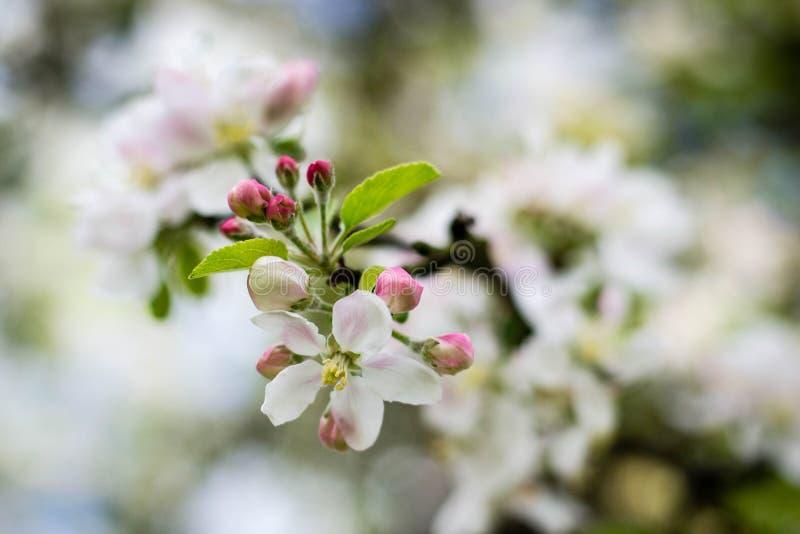 苹果美好的例证结构树向量 免版税图库摄影