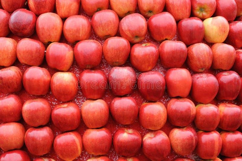 苹果背景红色 免版税库存照片